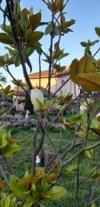 Къща за госит Света Марина Крапец